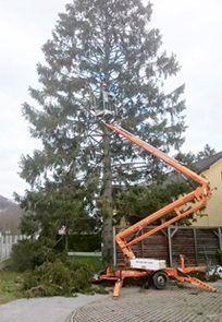 Baumschnitt oder Baumpflege in Wien